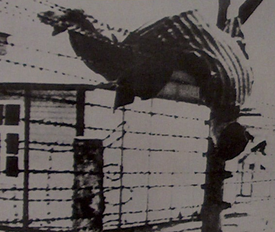 9rr-machine-gunned-and-left-to-hang-auschwitz